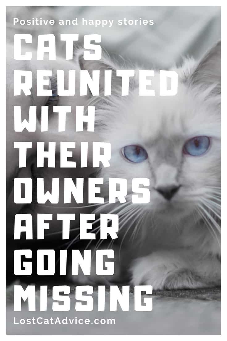 Happy cat stories: reunited with owners after getting lost or missing