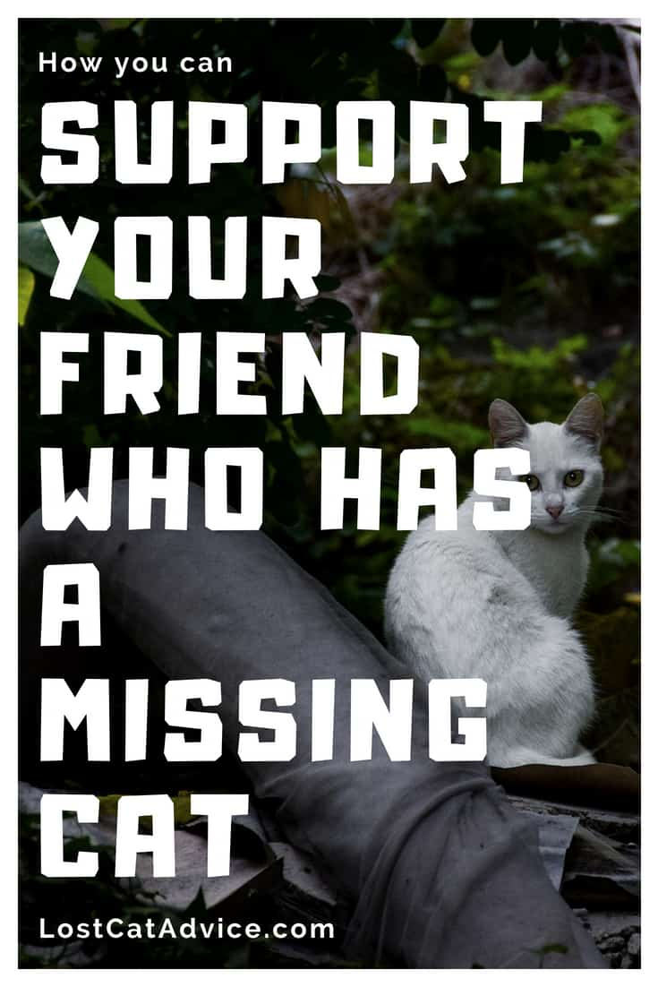 How to help your friend with a missing cat