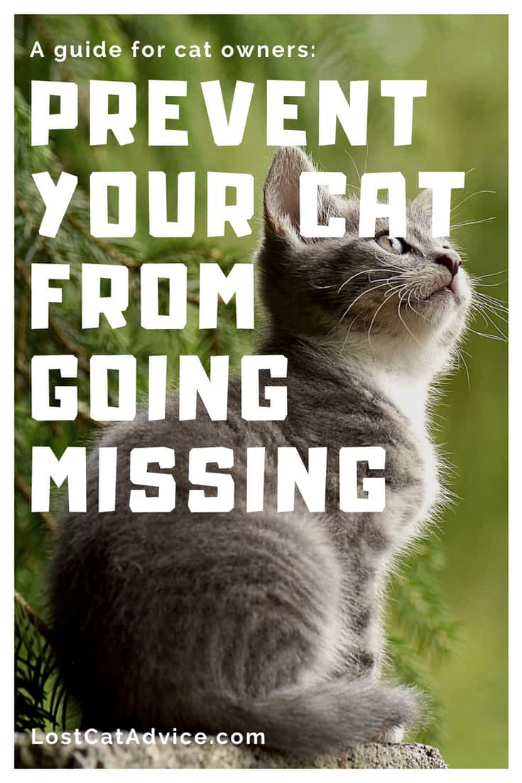 How to prevent your cat from going missing