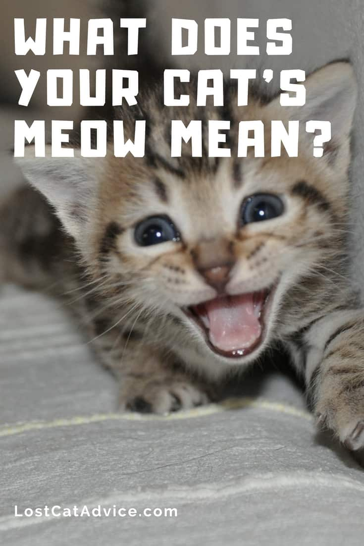 Cat meow meanings - Why do cats meow? What does your cat's meow mean?