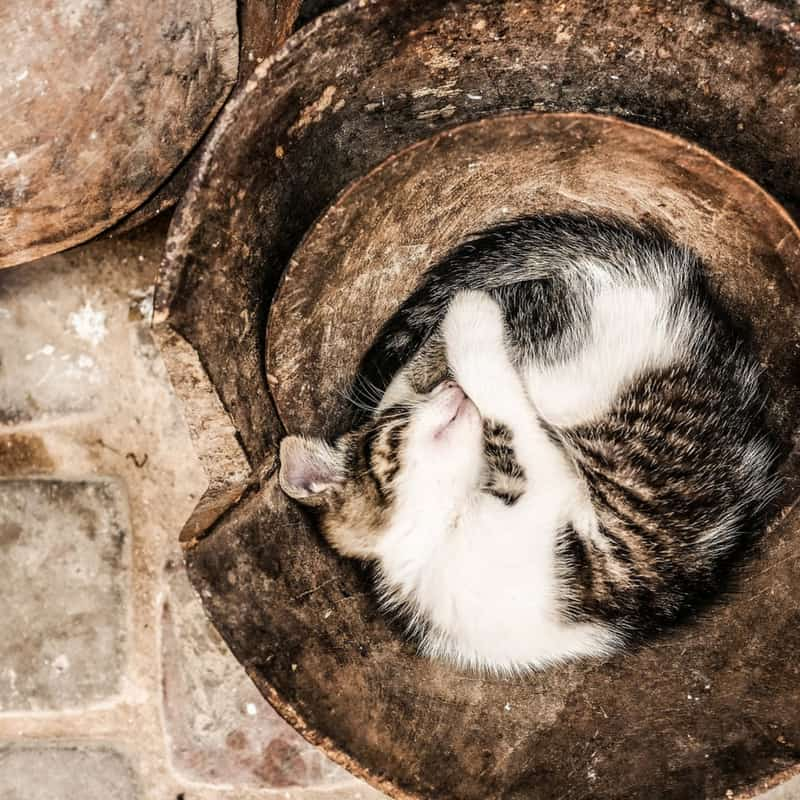 A cat curled up